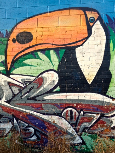 Toucan #1