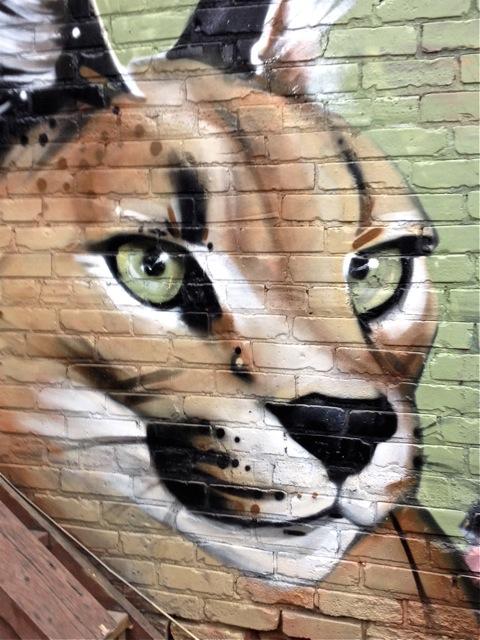 Newcat #2