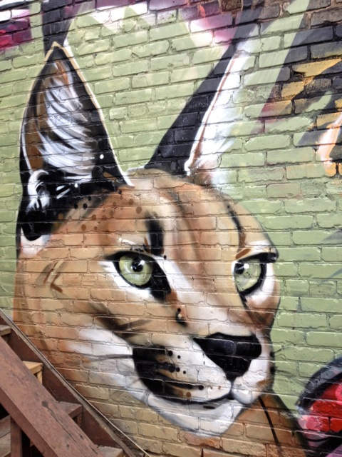 Newcat #3