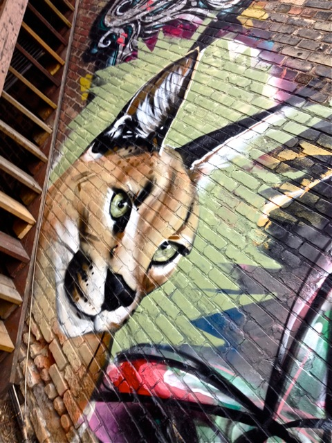 Newcat #4
