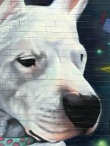 dogy1