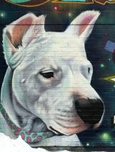 dogy2