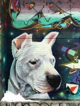 dogy4